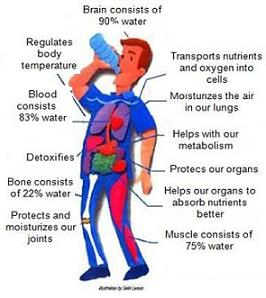 functions-of-water-in-the-body