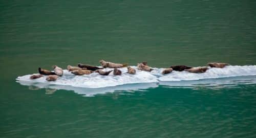 animals on iceberg