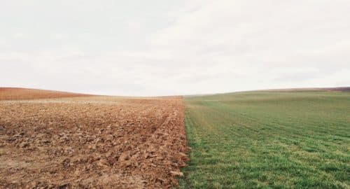 green grass field and brown soil